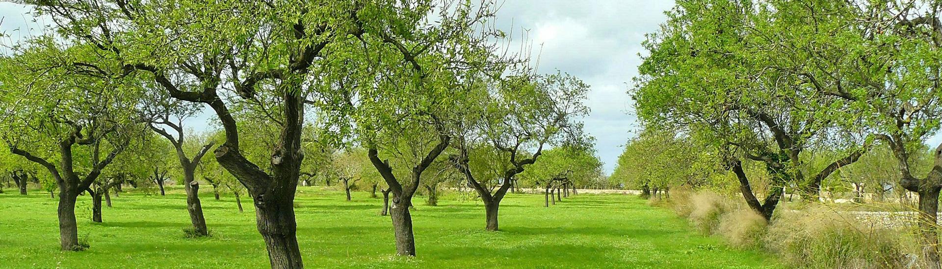 Piante Da Frutto Sempreverdi vendita di fiori e piante foligno | stagionali, da frutto